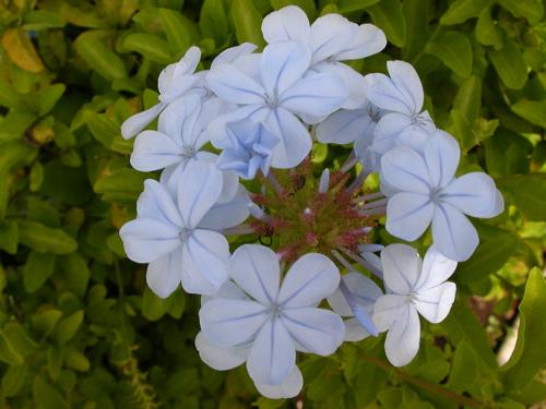 flower011.JPG