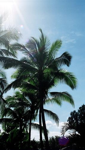 shiny_palm.jpg